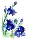 Floral   watercolor  illustration. Watercolor   floral background illustration, image, ink Royalty Free Stock Images