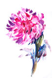 Floral watercolor illustration(3). Floral watercolor illustration summer  manuscript Royalty Free Stock Photo
