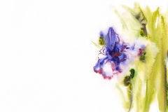 Floral watercolor illustration(3) Stock Photo