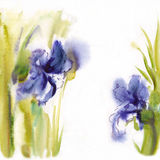 Floral watercolor illustration(3). Floral watercolor illustration blank  manuscript Stock Image