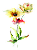 Floral watercolor illustration Royalty Free Stock Photography