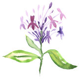 Floral watercolor painting Royalty Free Stock Photo