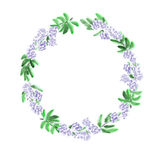 Floral watercolor wreath with violet flowers and deep green leaves on a white background royalty free stock images