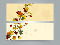 Floral website header or banner design. Stock Photography