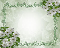 Floral Wedding Border Dogwood Royalty Free Stock Photo