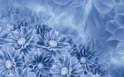 Floral white-blue beautiful background of dahlias. Flower composition. Nature royalty free stock photos
