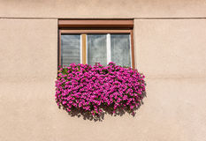 Floral window Stock Photos