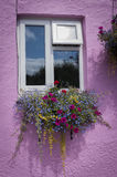 Floral window box. White window with mixed floral window box in pink wall Stock Photos