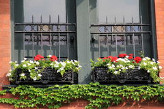 Floral window boxes and trailing ivy Royalty Free Stock Photos