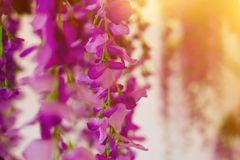 Floral wisteria artificial decoration for interior, restaurants, weddings and parties stock photography