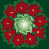 Floral wreath of poinsettia. Floral wreath of christmas poinsettia, gift, present, congratulation, nativity, red, flower, advent, background, garland, wreath Royalty Free Stock Photos