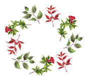 Floral wreath with red flower and leaves Stock Images