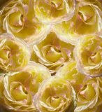 Floral yellow-white beautiful background.  Flower composition of yellow-pink roses. Stock Photo
