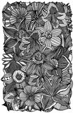 Floral zentangle vector illustration Royalty Free Stock Photo