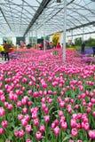 Floralies Images libres de droits