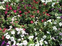 Floralies du Kerala Photographie stock