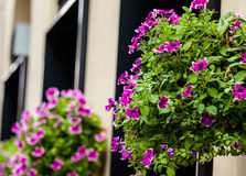 Floralpots. Hanging on a building's wall stock images