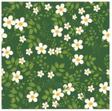 Florals of seamless pattern background Royalty Free Stock Images