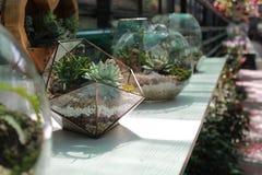 Florarium Foto de archivo libre de regalías