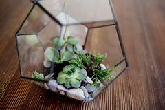 Florarium de cristal en la tabla foto de archivo