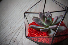 Florarium. Handmade glass florarium, home deign Stock Photos