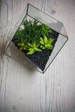 Florarium. Handmade glass florarium, home deign Royalty Free Stock Photo
