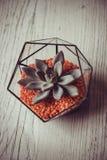 Florarium. Handmade glass florarium, home deign Stock Photo