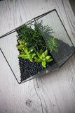 Florarium. Handmade glass florarium, home deign Stock Photography