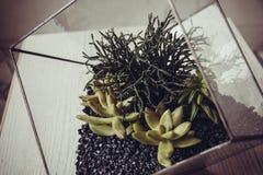 Florarium. Handmade glass florarium, home deign Stock Images