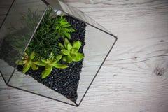 Florarium. Handmade glass florarium, home deign Royalty Free Stock Images