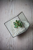 Florarium. Handmade glass florarium, home deign Royalty Free Stock Photography