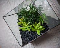 Florarium. Handmade glass florarium, home deign Stock Image