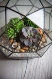 Florarium. Handmade glass florarium, home design Stock Images