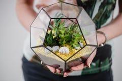 Florarium Szklana waza z tłustoszowatą rośliną Miniaturowy kaktus w a Fotografia Stock