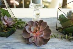 Florarium z świeżym sukulentem i wzrastał kwiat świąteczną stołową dekorację Wydarzenie świeżych kwiatów dekoracja Kwiaciarnia ob fotografia stock