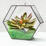 Florariums sur la table Concept de jardinage à la maison de passe-temps photos libres de droits