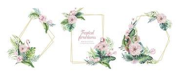 Florariums tropicales del oro de la acuarela exhausta de la mano con el flamenco Ejemplos ex?ticos del marco del florarium para e stock de ilustración