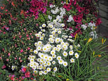 Florart 2015 , färgglade blommor, Zagreb, Kroatien, Europa, 2 Royaltyfria Bilder