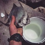Flordia αλιείας Στοκ Εικόνα