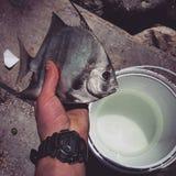 Flordia di pesca Immagine Stock