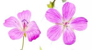 Flore photo libre de droits