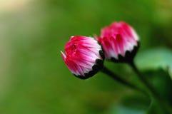 Flore Photographie stock libre de droits