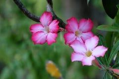 flore Photo stock