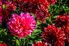 flore Photos libres de droits