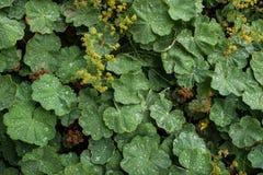 Flore 18 Photo libre de droits