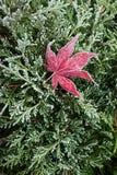 Flore 24 Images libres de droits