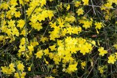 Flore 40 image libre de droits