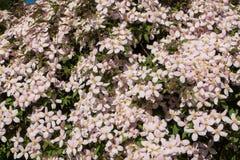 Flore 79 Photo stock