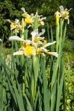 Flore 57 Photographie stock libre de droits