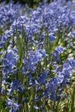 Flore 65 Photos stock